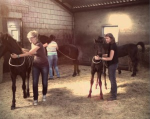 jonge paarden_Horperhoeve